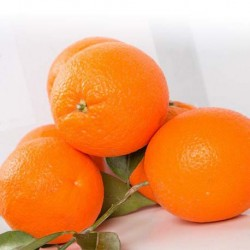2 x 15 KG TABLE ORANGE AND ORANGE FOR JUICE