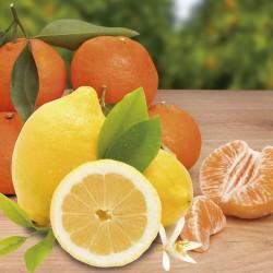 Caja de 15 kg. de mandarina con limones